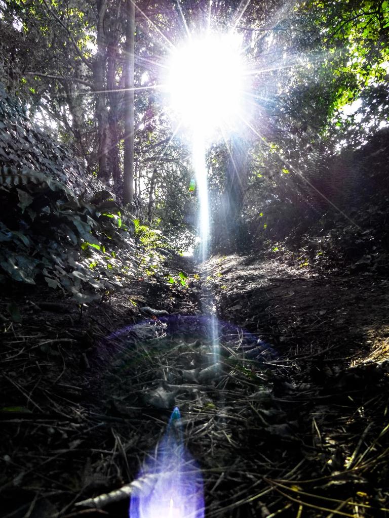 Devon Blog-15
